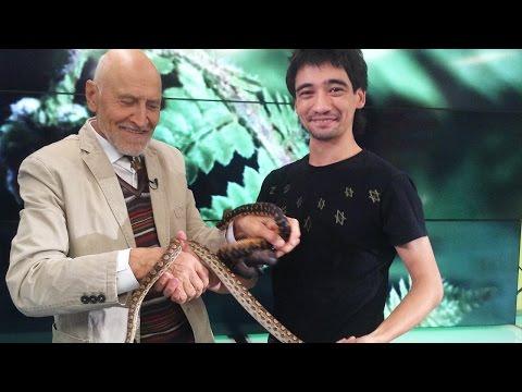 Арслан Валеев на передаче «В мире животных»