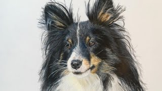 Another beautiful dog , polychromos on drafting film
