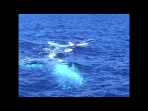 Pacific Eagle adventures include whales in Tonga, South Pacific