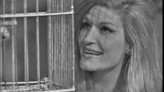 Dalida - Le petit perroquet (1968)