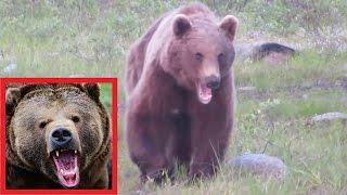 Еле-еле отбились от медведя