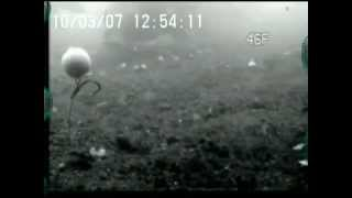 Ловля коропа підводне відео(http://on-fishing.com/video-rybalka/355-lovlya-koropa-pdvodne-vdeo.html., 2012-04-06T13:14:38.000Z)
