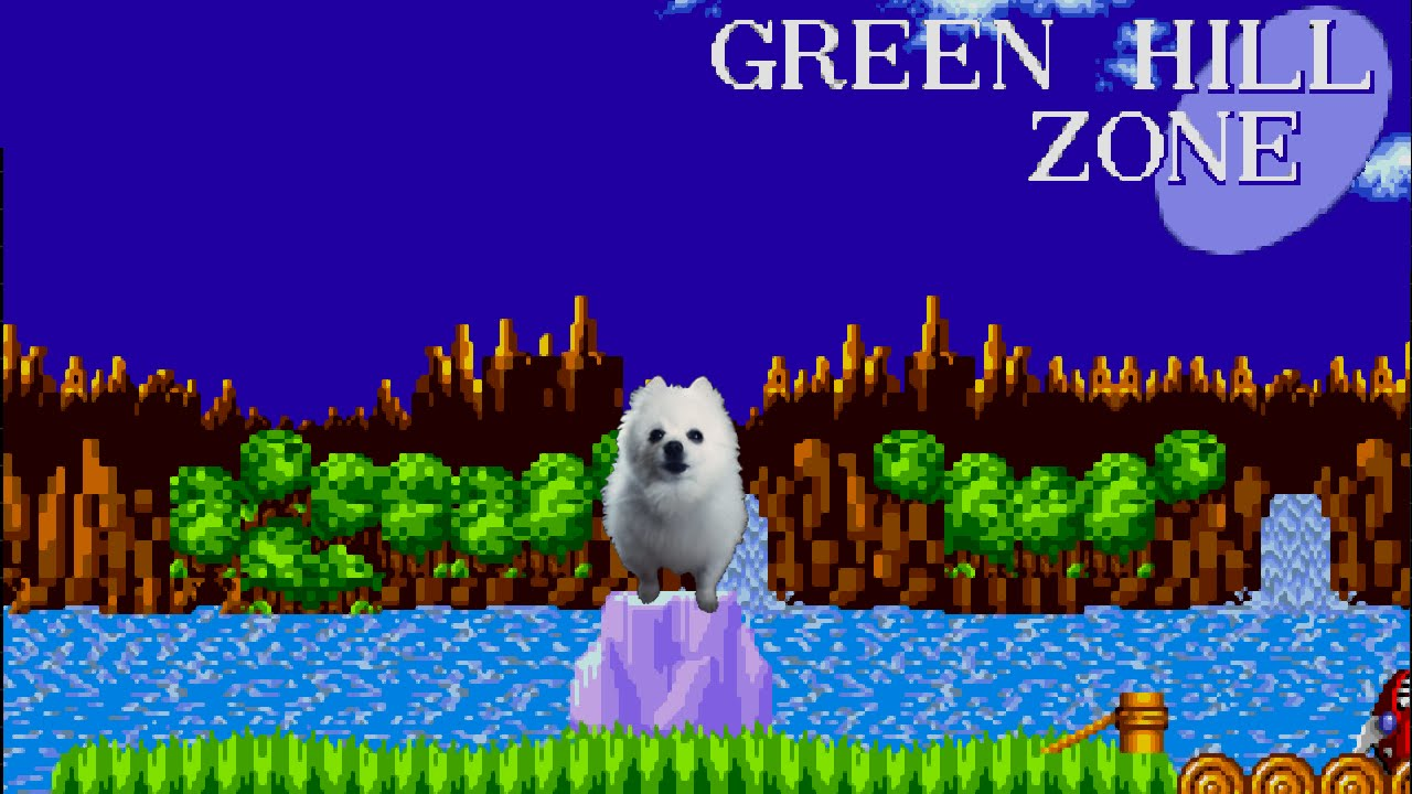 Gabe The Dog Green Hill Dog Sonic The Hedgehog Youtube