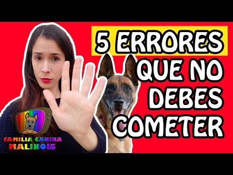 5 ERRORES que COMETES al entrenar a tu perro que ARRUINAN SU OBEDIENCIA | Adiestramiento Canino