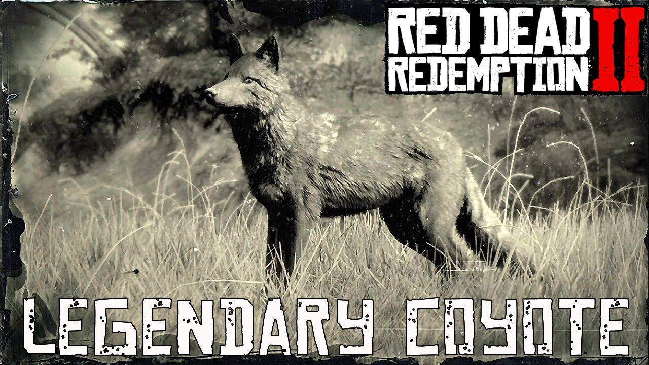 Red Dead Redemption 2 Legendary Animals coyote
