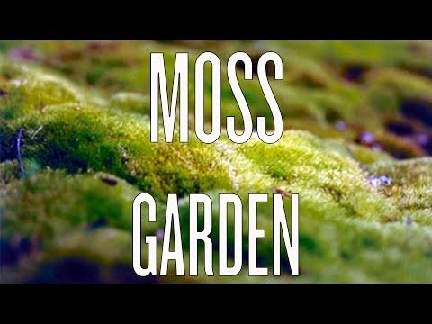 Growing A Moss Garden   YouTube