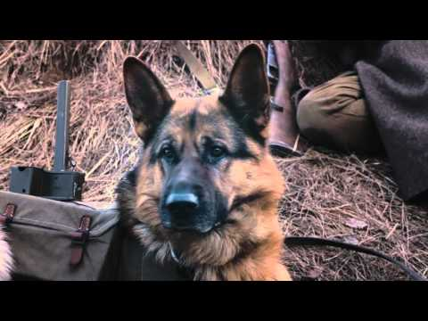 Пёс Рыжий - Официальный трейлер (31 октября 2015)