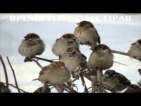 Паспортный Стол - время птичьих прав (2013)