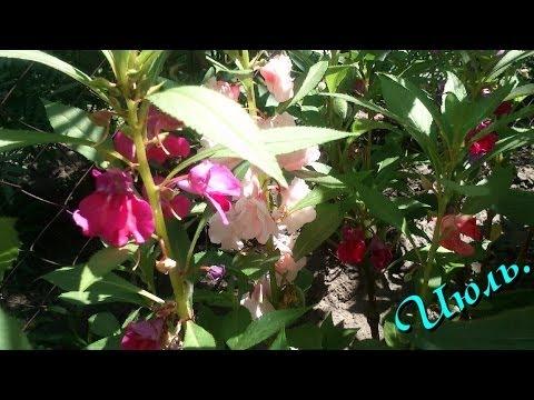 Комнатные растения в открытом грунте (Продолжение Июль) Часть 2-я