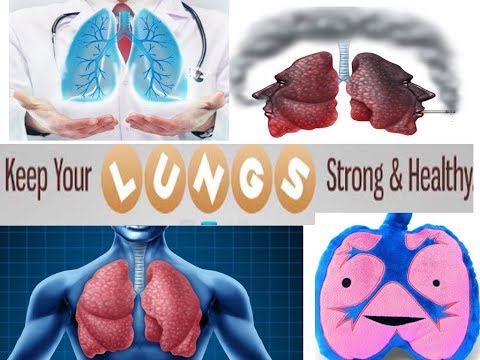 5-natural-way-to-keep-human-lungs-healthy-strong-and-clean-from-toxins