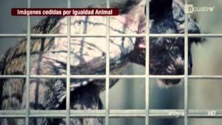 Geheime Aufnahmen aus Tierversuchslaboren - Animal Equality Recherche