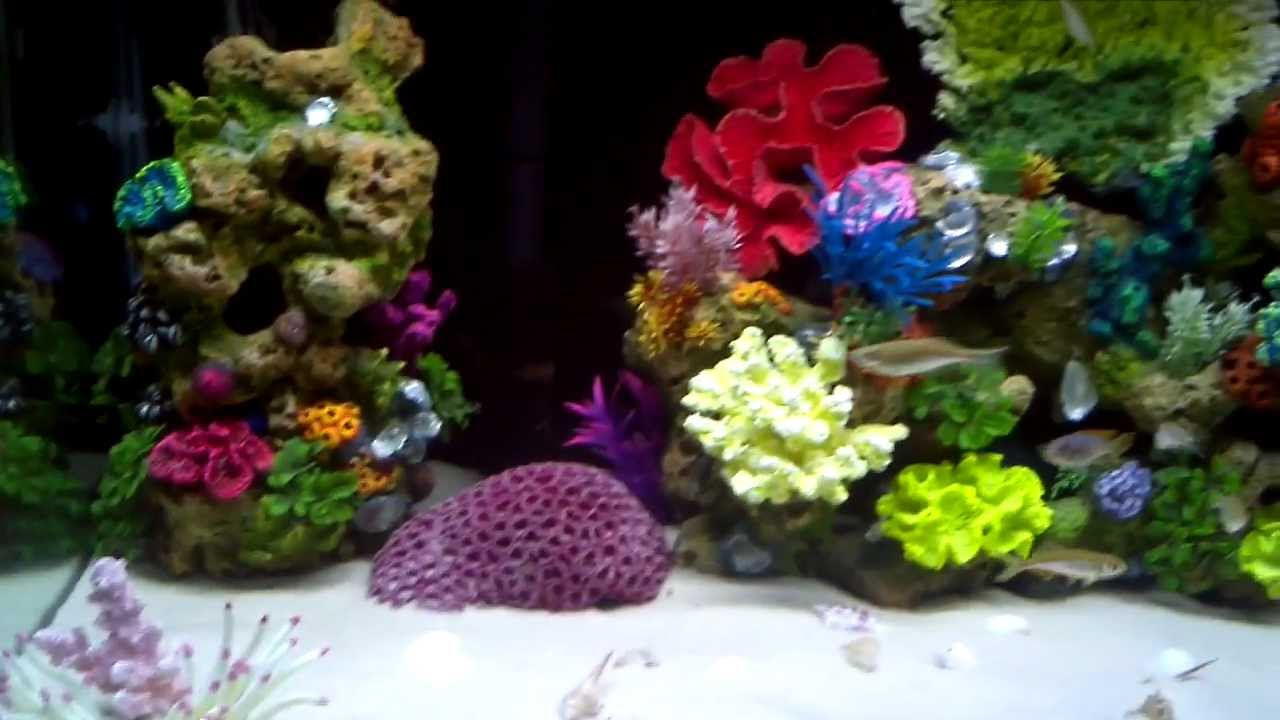 Freshwater aquarium fish that look like saltwater fish - 75 Gallon Freshwater Cichlid Aquarium With Saltwater Theme