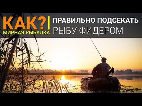 Как подсекать рыбу фидером?