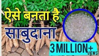 ऐसे बनता है साबुदाना । Sabudana ( Tapioca Sago ) Making Process in Hindi