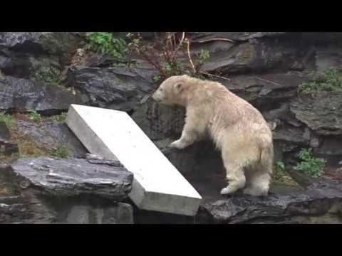 Eisbär Mädchen Hertha Wie bekomme ich das Surfbrett ins Wasser 18 08