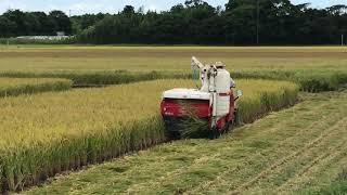 稲刈りが始まりました。 8月18日は米の日だそうです。 iphone7+smoot...