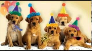 Cute Dogs Bark At You Happy Birthday Youtube