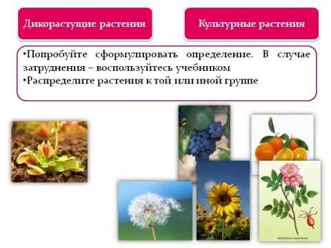 Биология. Растения. Бактерии. Грибы и лишайники. 6 класс