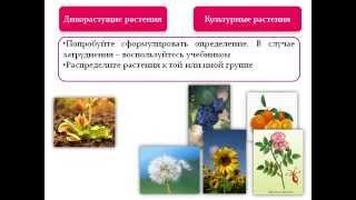 Наука о растениях- ботаника.AVI