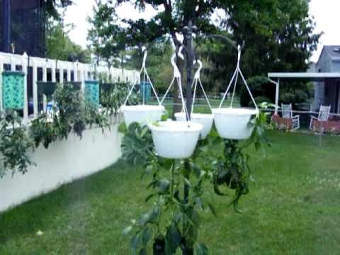 Topsy Turvy Garden Containers Upside Down Pots Growing Tomatoes