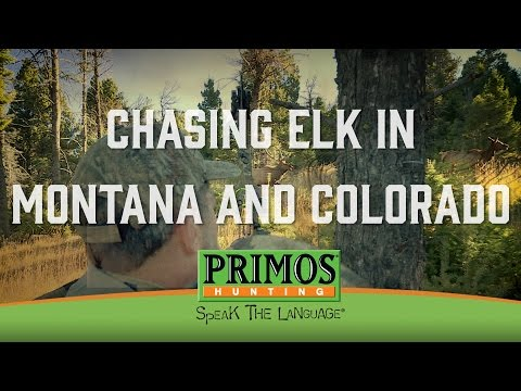 Chasing Elk in Montana and Colorado