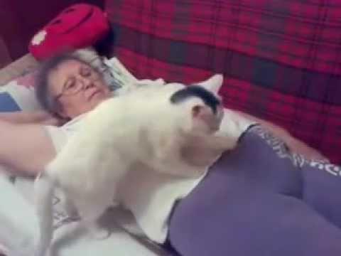 ТОП ПРИКОЛ дня: КОТ ДЕЛАЕТ МАССАЖ девочке // Смешные кошки