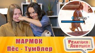 Реакция девушек - МАРМОК Far Cry New Dawn 'Баги, Приколы, Фейлы'. Реакция