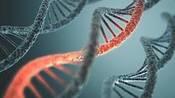 Are Drug Addicts Born Susceptible?