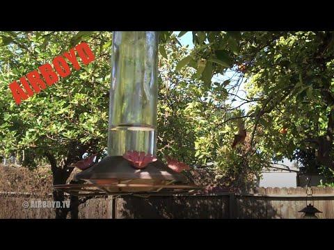 Hummingbird Flip Mino