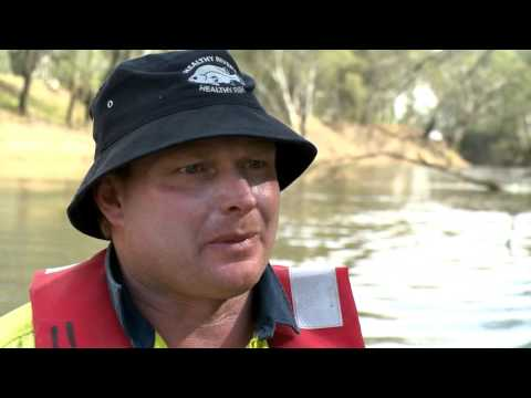 Monitoring the effects of environmental water in the Goulburn River - native fish