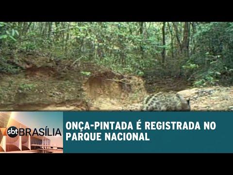 Onça-pintada é registrada no Parque Nacional