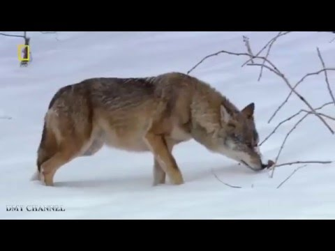 Documentaries 2016 - Wild Russia Siberia Nature Documentary HD