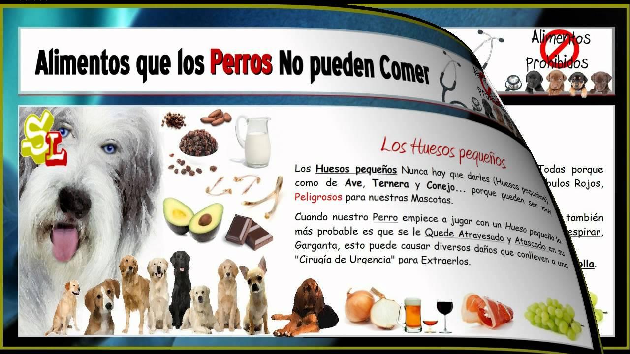 Lista de alimentos que no pueden comer los perros alimentos da inos y perjudiciales para el - Alimentos recomendados para perros ...