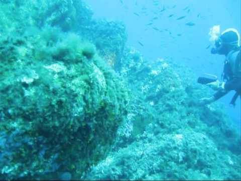 Campomoro Plongée Plaisir : Plongée en Corse du Sud dans le Golf du Valinco