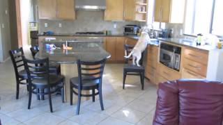 Что делает собака, когда хозяина нет дома?(http://gavpost.ru/ - лучшие видео с собаками, фото щенков и новости о собаках!, 2014-03-07T17:44:44.000Z)