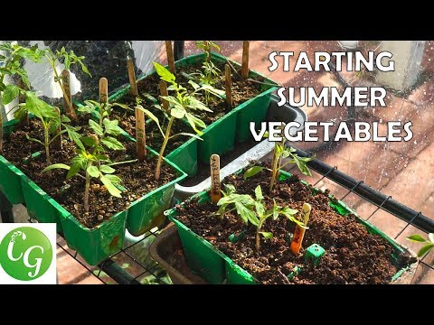 Starting Summer Vegetables – A Complete Guide To Starting Vegetable Seeds – Tomatoes, Peppers etc.