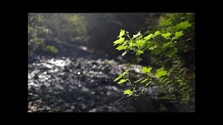 "3 HR HEALING FOREST STREAM SOUNDS ""Cascading Forest Creek"" Stereo MP3 For Download"