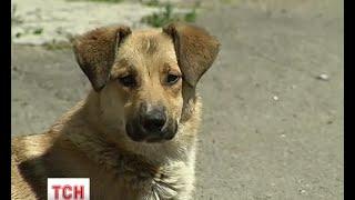 У Києві масово потруїли собак