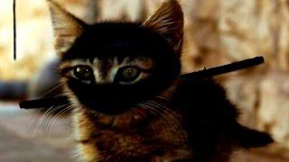 Кошки Ниндзя - Приколы с Кошками - Смешные Кошки Ноябрь 2016 ( Выпуск #5)