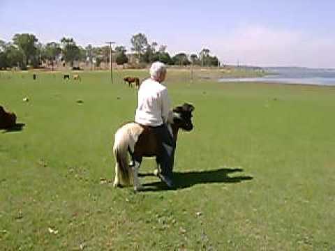 copito y el pony salvaje