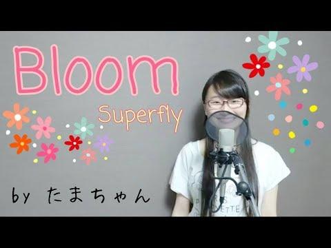 Superfly / Bloom(歌詞付き フル) ゼクシィ「愛を祝おう」テーマソング(たまちゃん)【女子大生が歌ってみた】