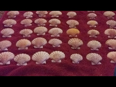 Vloggle #28: Cleaning Sea Shells!