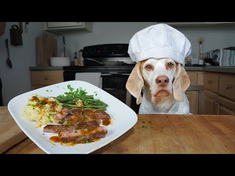 Chef Dog Cooks Steak Dinner for Friends: Funny Dog Maymo