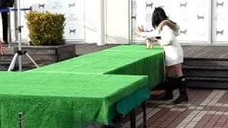 2009年11月8日 大宮そごうで行われた犬のファッションショーの動...