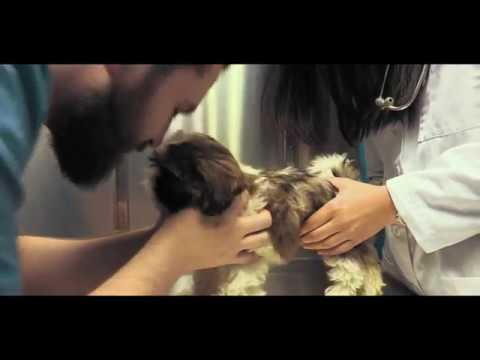 Queens Animal Hospital| Quality Veterinary Care in Woodside, New York