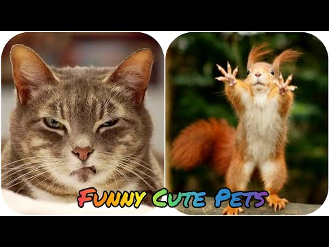 Cute Funny Pets || Funny Animals Videos || Pet Lovers Tv