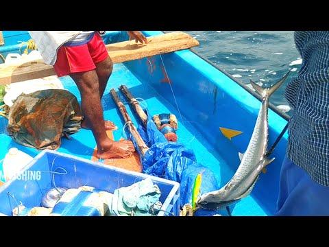 வஞ்சரம் மீன் !!! KINGFISH FISHING  IN THE SEA