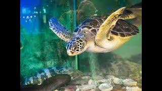 Аквариумные черепахи содержание и уход