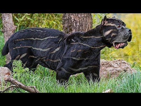 10 RAREST DOG BREEDS IN THE WORLD