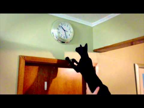 ORIENTAL CAT DISCOVERS CLOCK